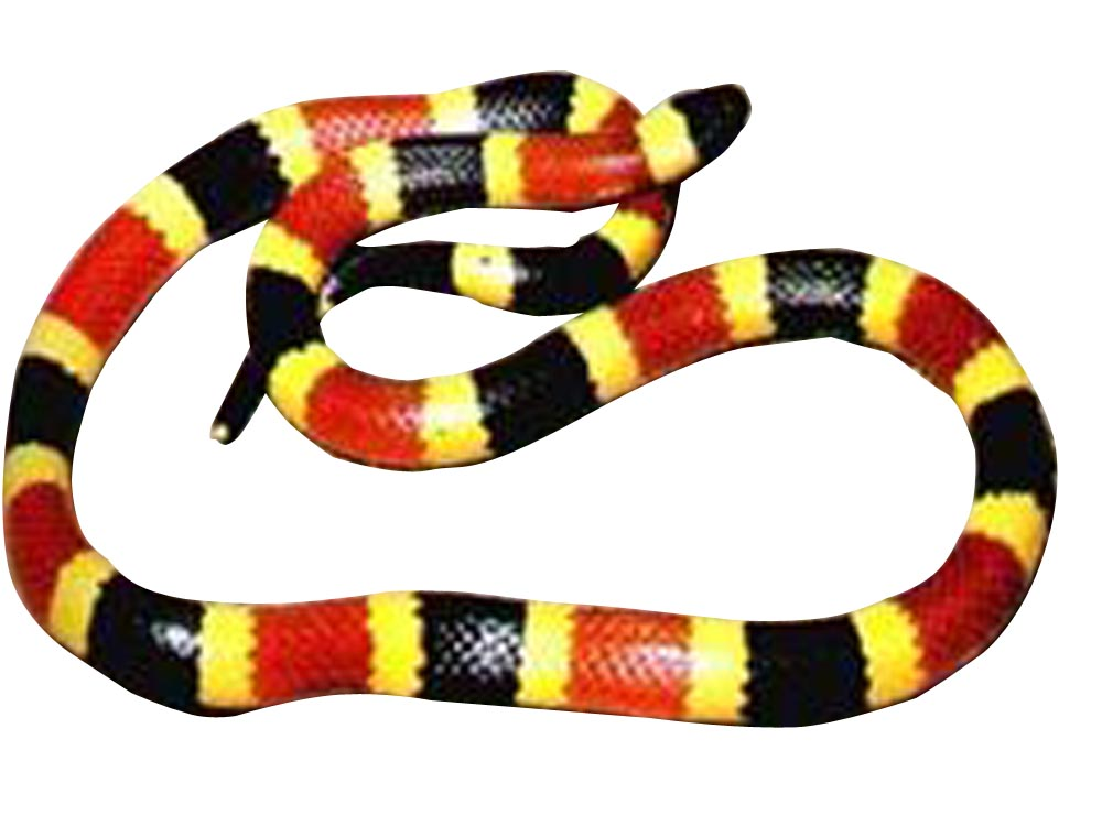 Snake Rhyme For Coral Snake Coral Snakes Which Possess
