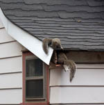 Whether it is squirrels or bees, Nuisance Wildlife Removal of Tampa will remove them.